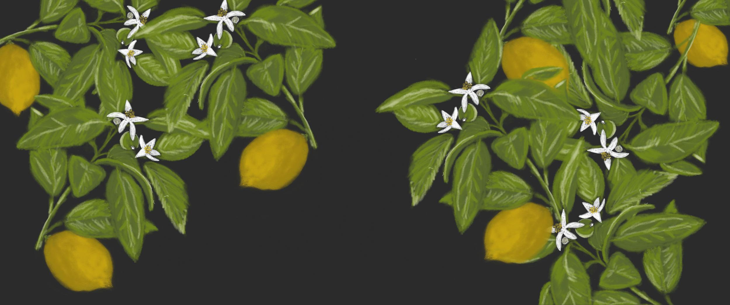Botanical Patterns -