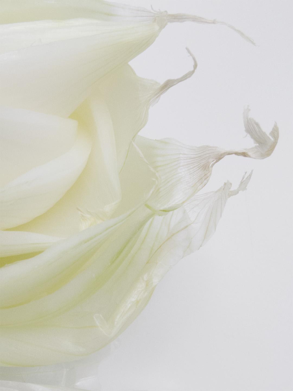 white onion petals