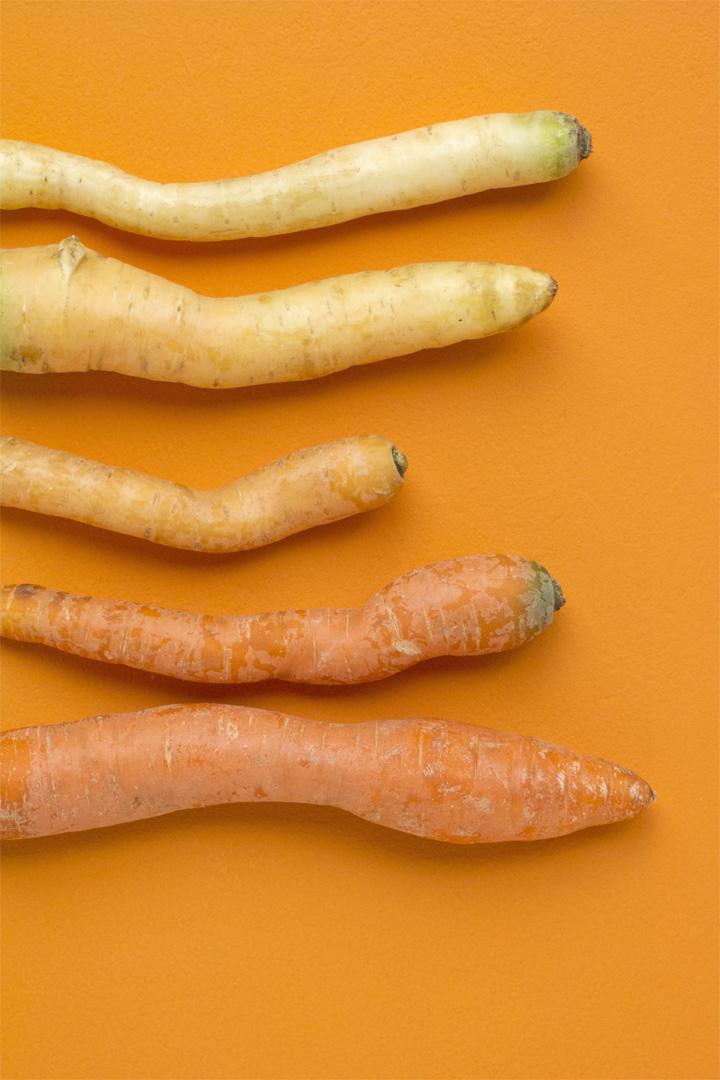 Carrots_fam#2_FOODISM360.jpg