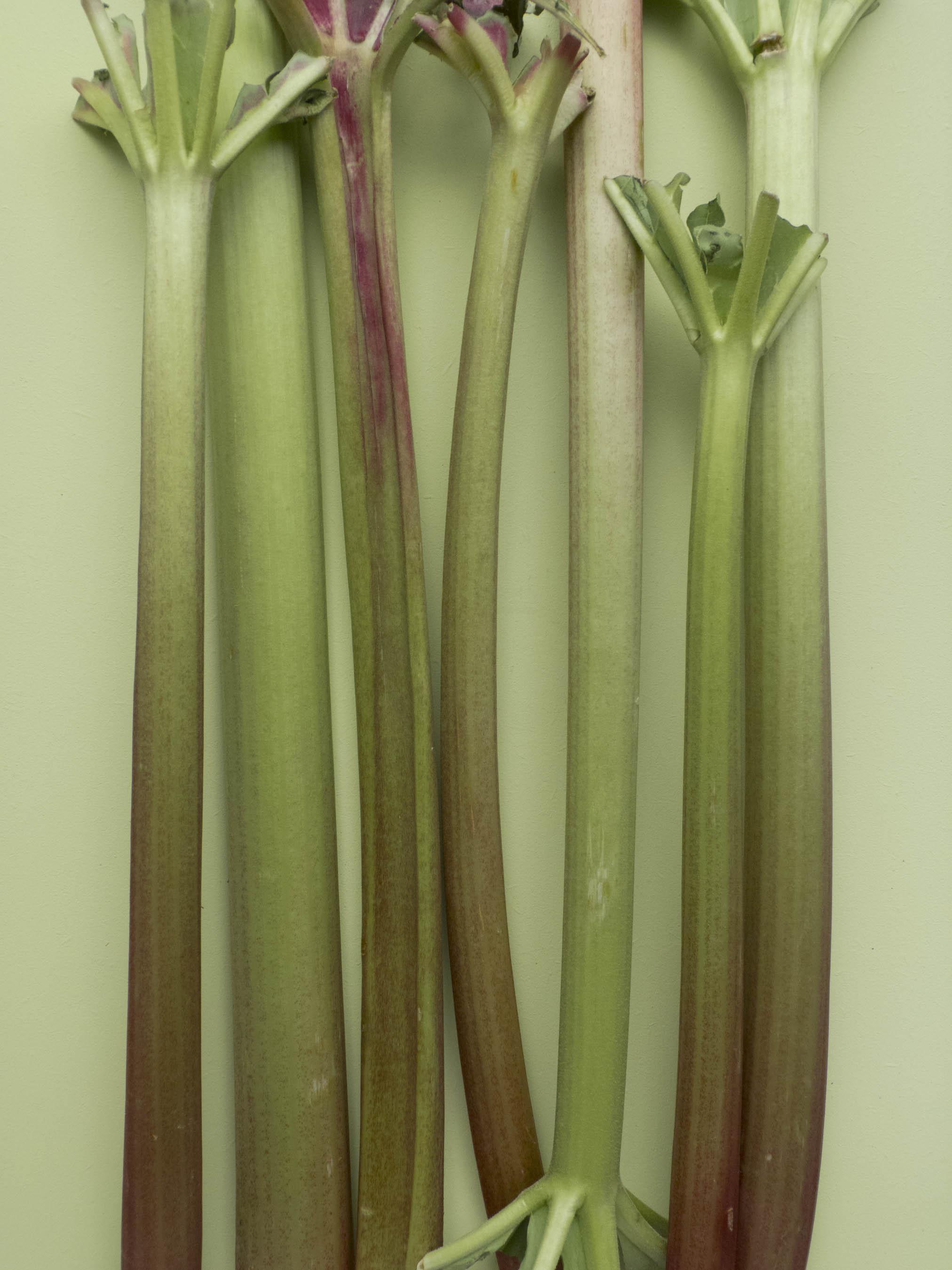 Rhubarb_1300191.jpg