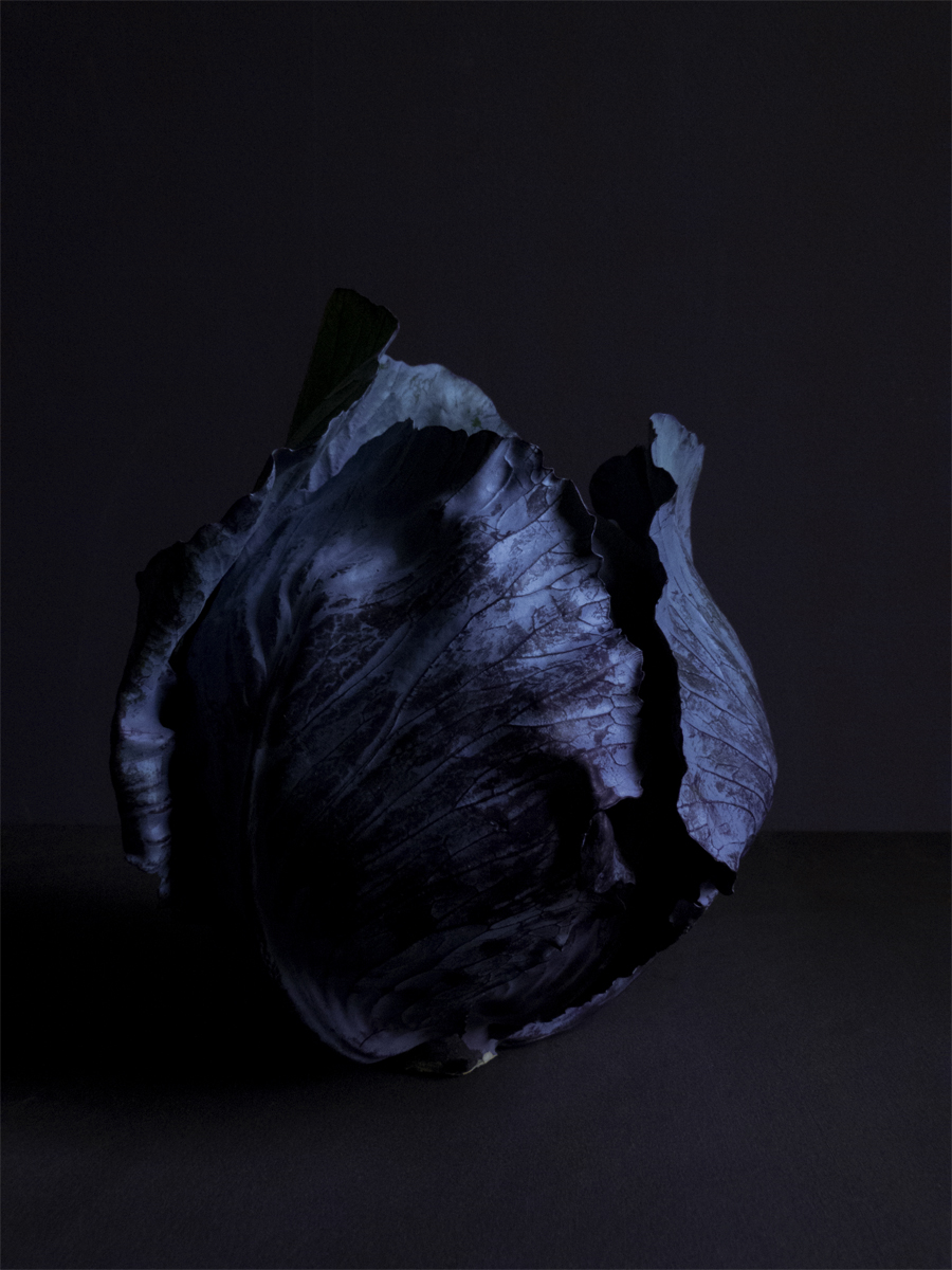 Red_cabbage_blue_hour.jpg