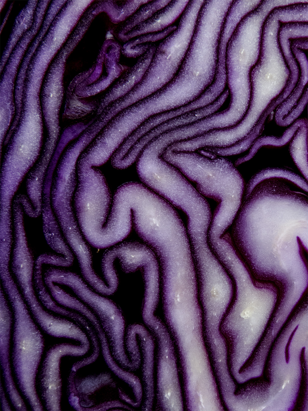 Red_cabbage_2.jpg