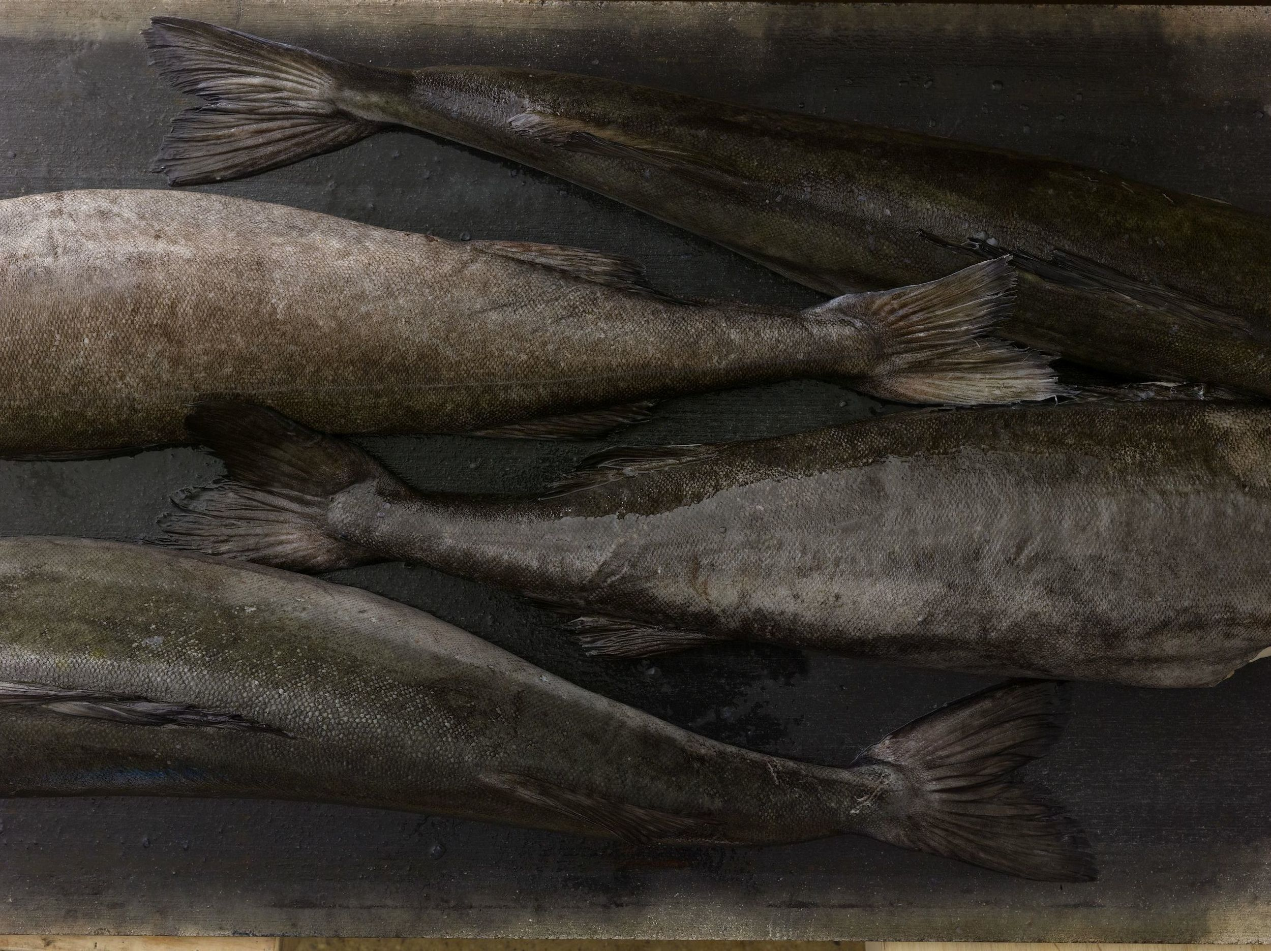 Excellence &Responsibility    PREMIUM SEAFOOD    Sablefish/Black Cod