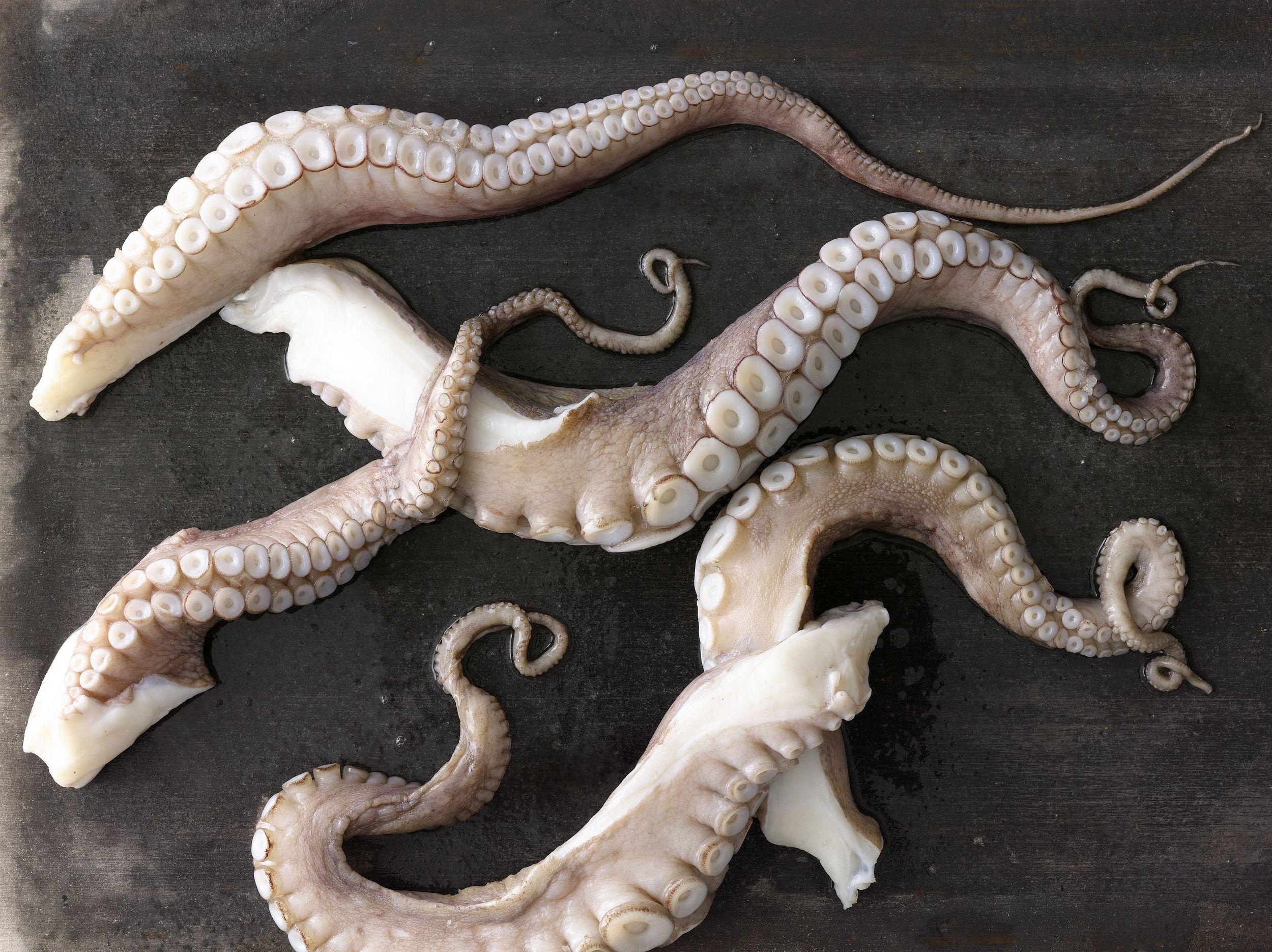 Octopus_029.jpg