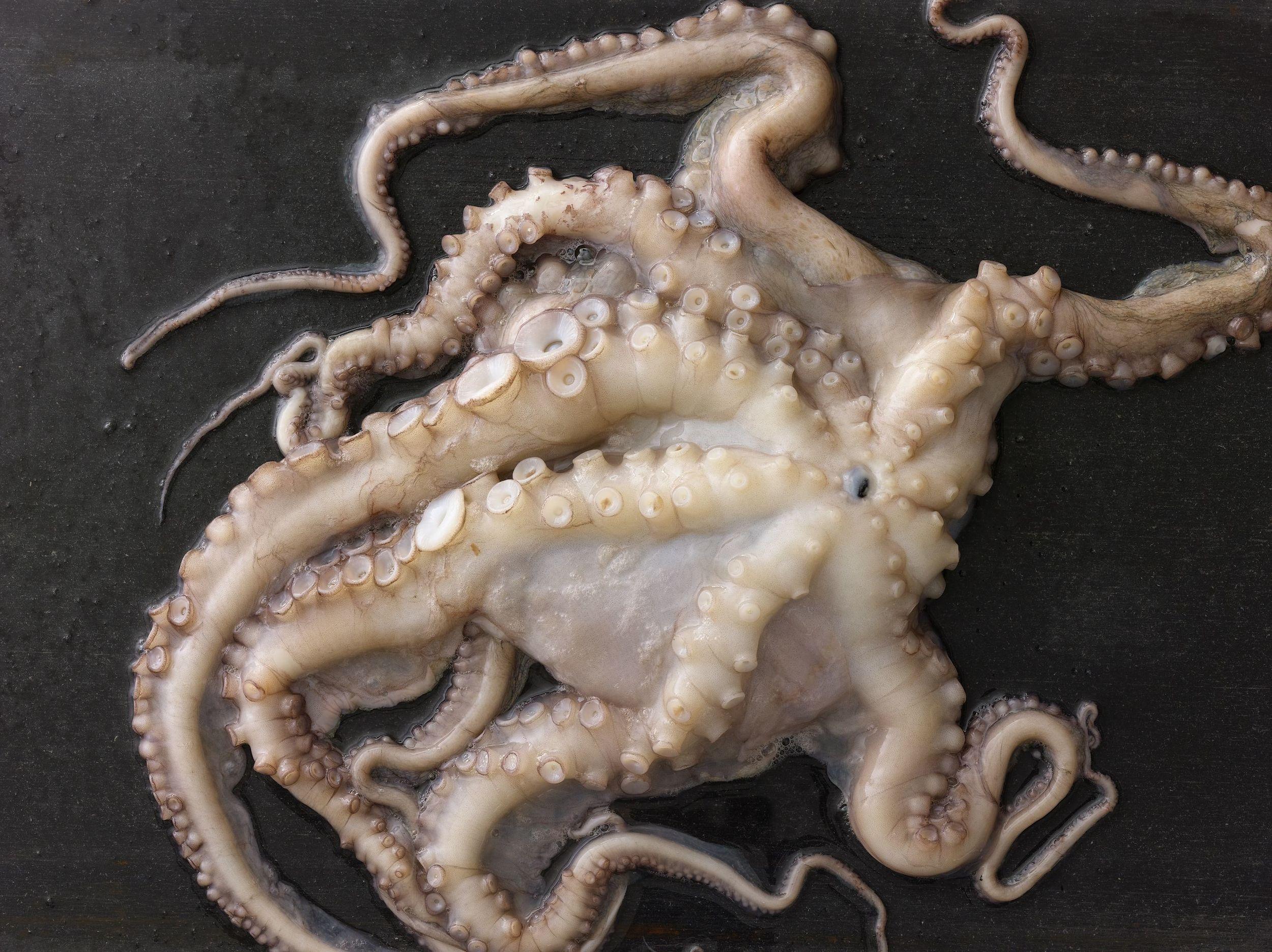 Octopus_507.jpg