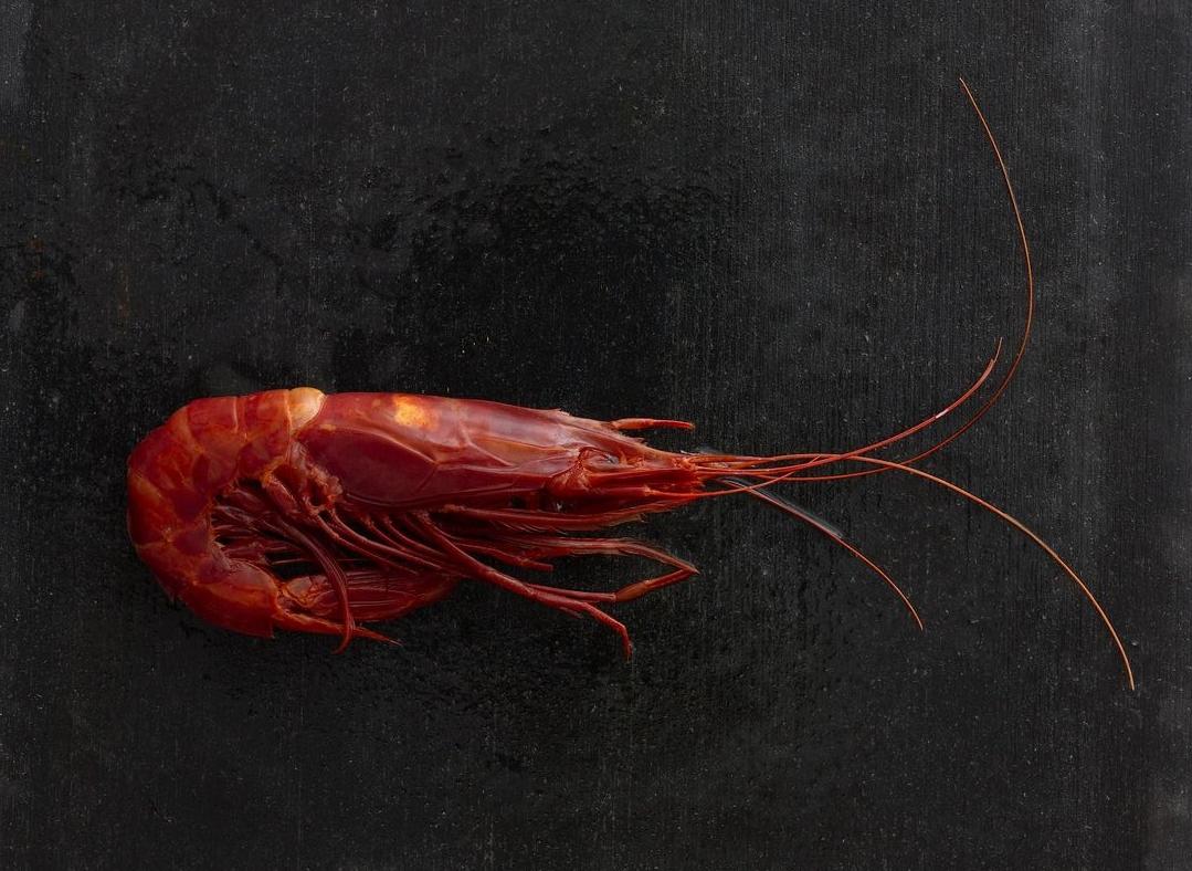 Shrimp_509.jpg
