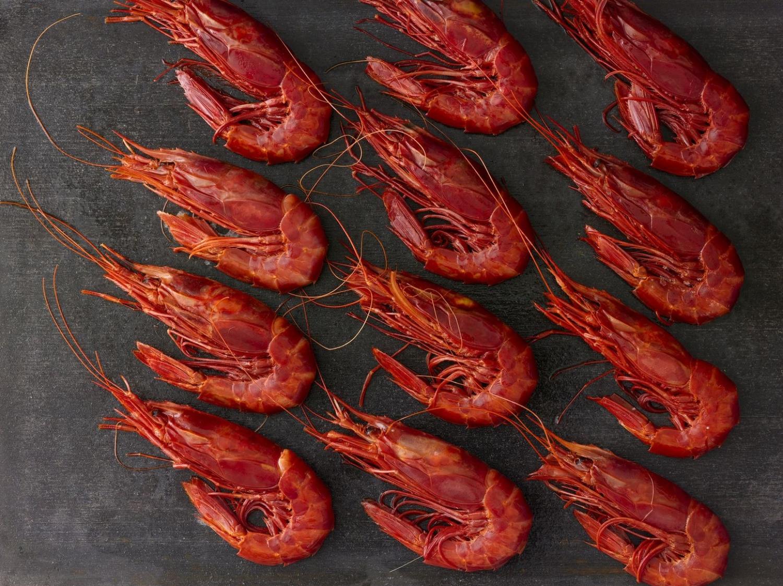 Shrimp_090.jpg