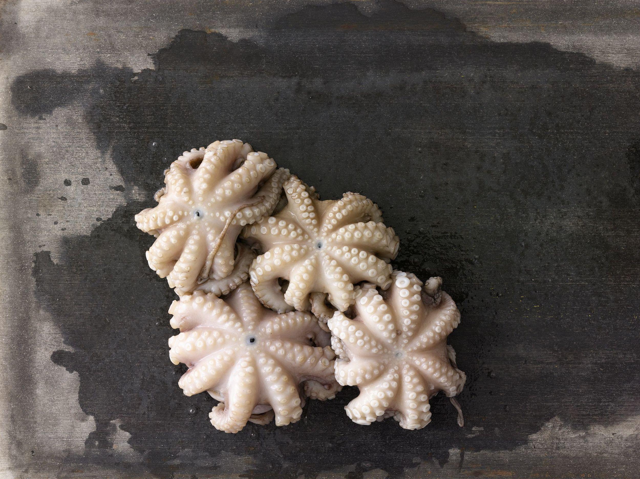 Octopus_043.jpg