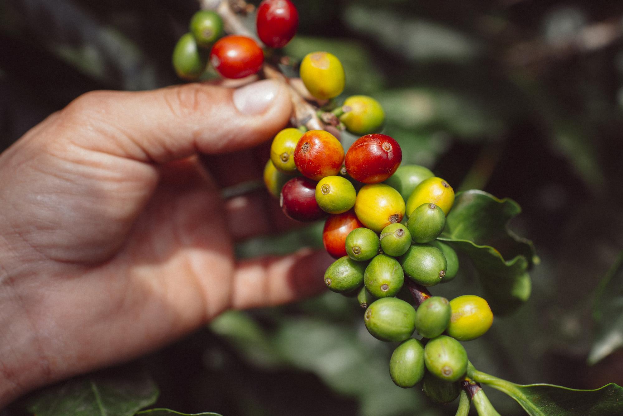 kaffe-colombia.jpg