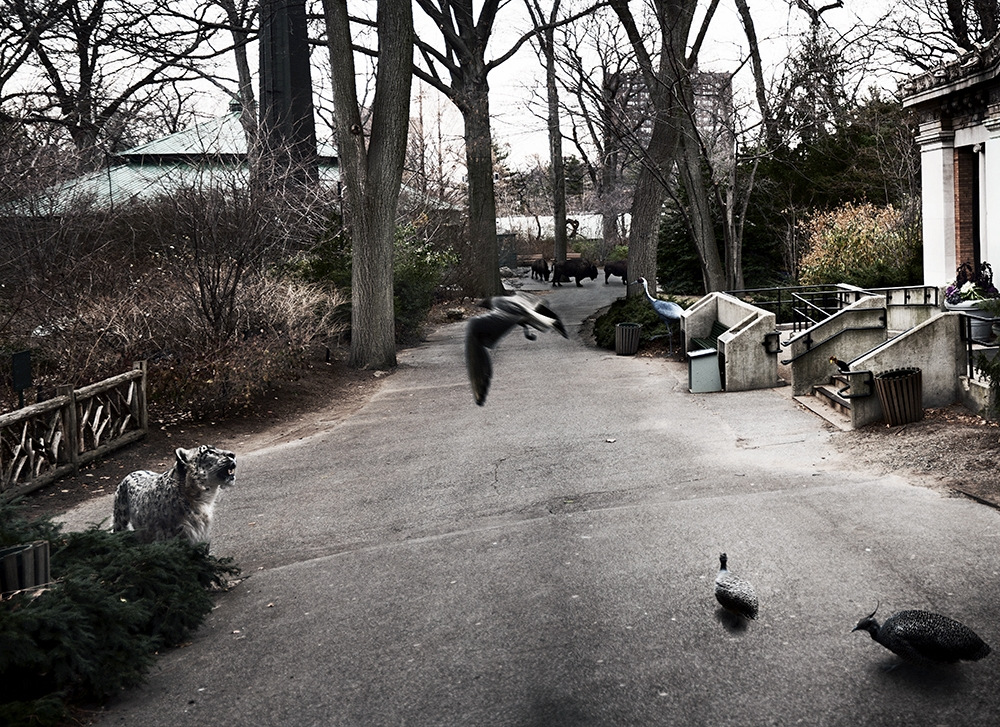Untitled (Zoo) 2011.jpg