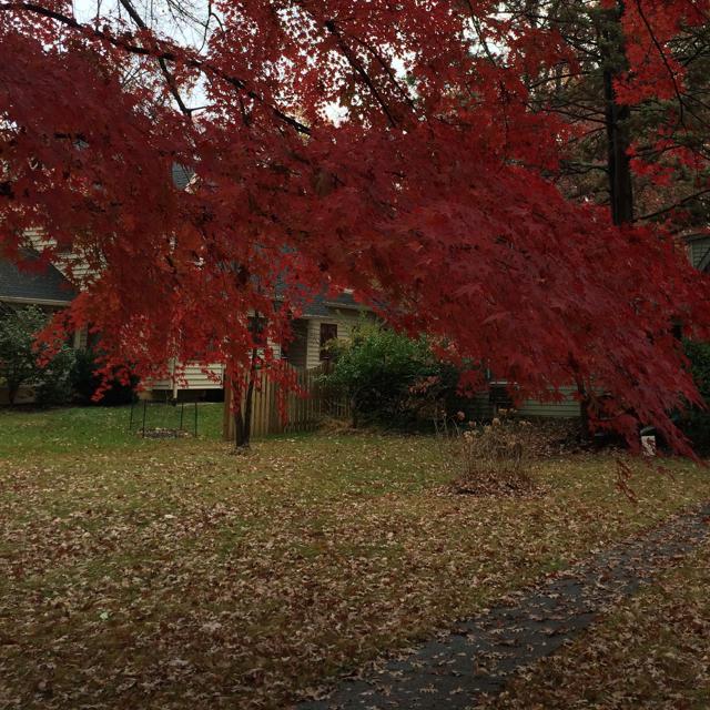 Autumn in Washington Grove, Md.