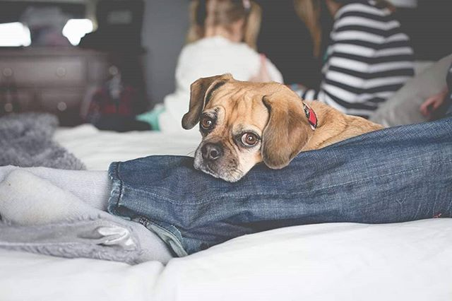 Don't worry sweet pup, you are just as much important as those crazy kiddos! I'll get your photo too.  If you have a furry kid, trust me I love on them just as much as the kids! The whole family gets involved! . . . #dogsofinstagram #dogsarefamily #familyphotography #petportraits #humbleandkind #wisconsinphotographer #3buttonsphoto #photooftheday