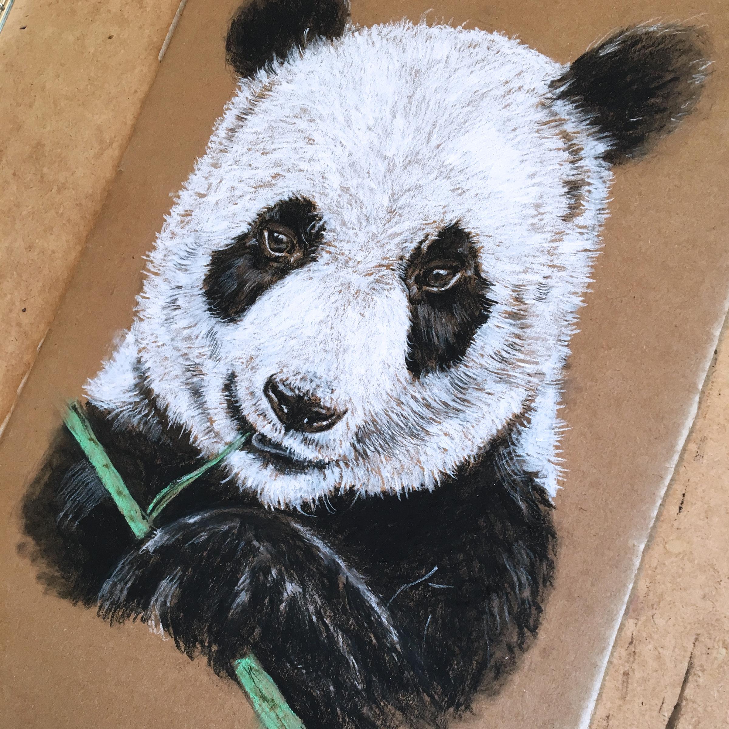 cardboard-art-charcoal-panda-sketch-by-jordan-fretz-3.jpg
