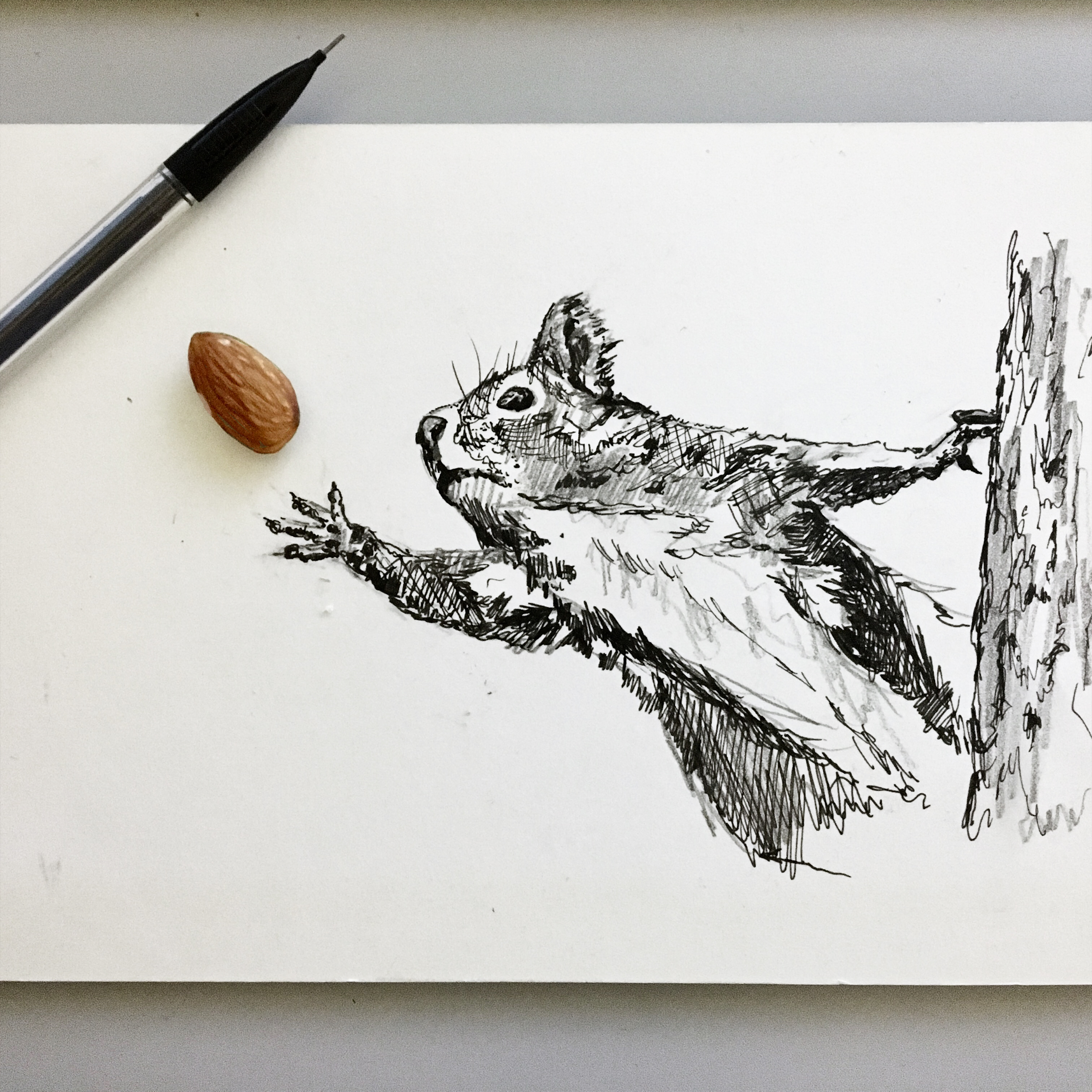squirrel-with-almond-interactive-drawing-by-jordan-fretz.jpg