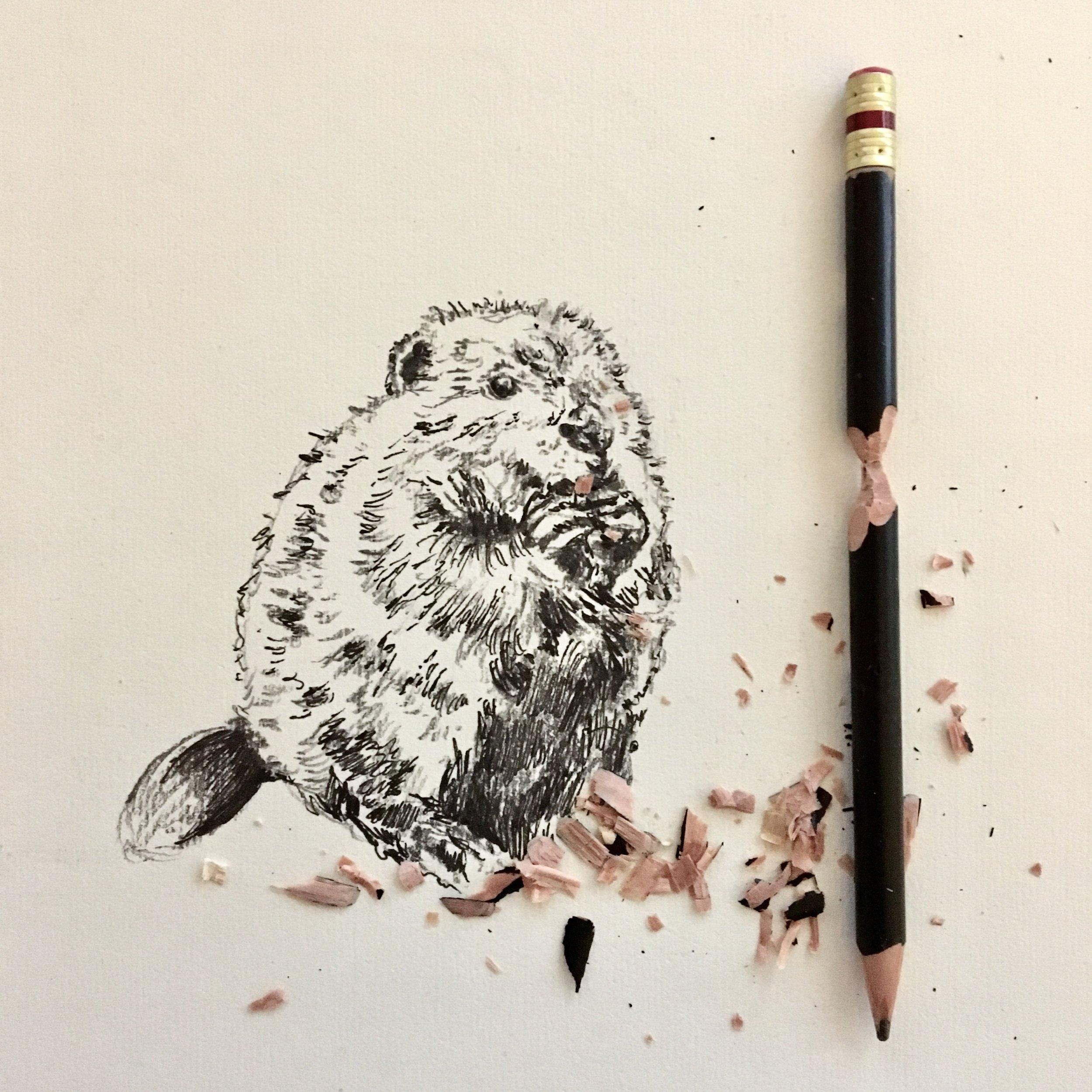 beaver-interactive-drawing-by-jordan-fretz-art.jpg