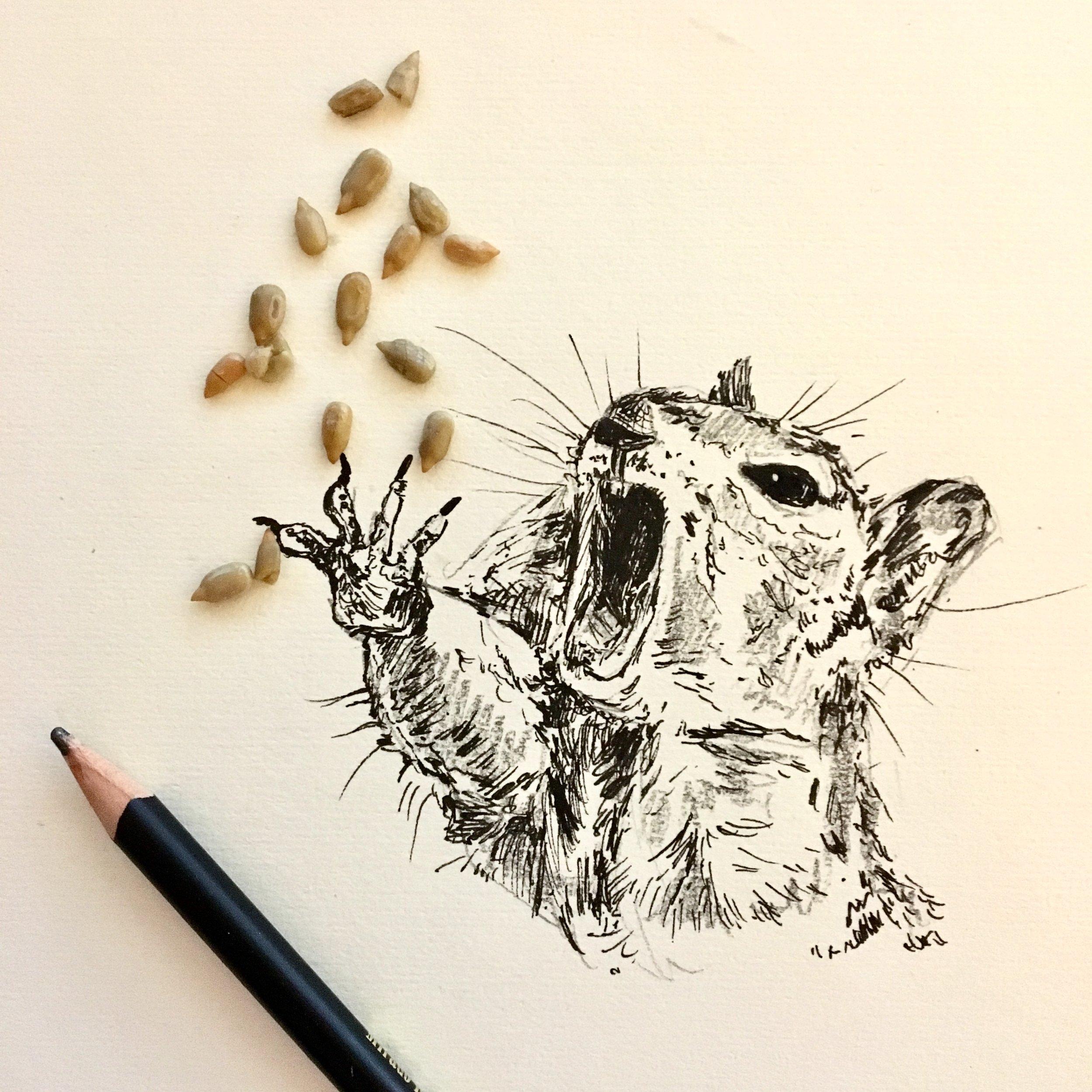 squirrel-interactive-illustration-by-jordan-fretz-art.jpg