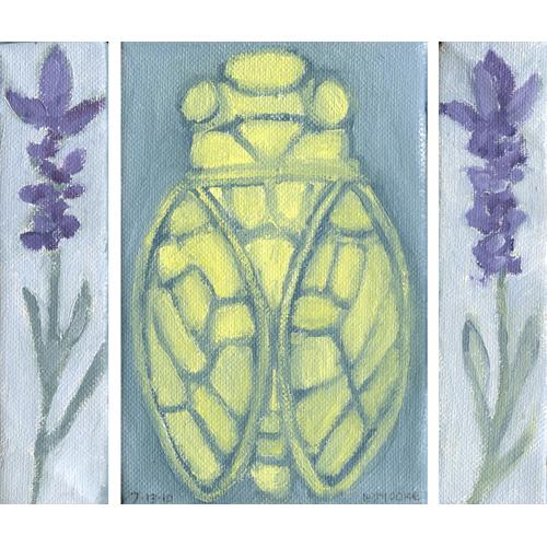 Cicada, Provence