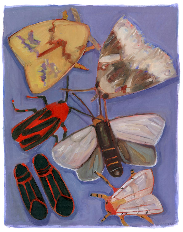 Minnesota Moths (& Box Elders)