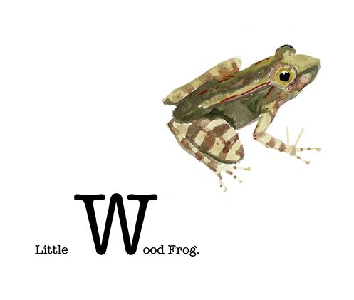 Little Wood Frog