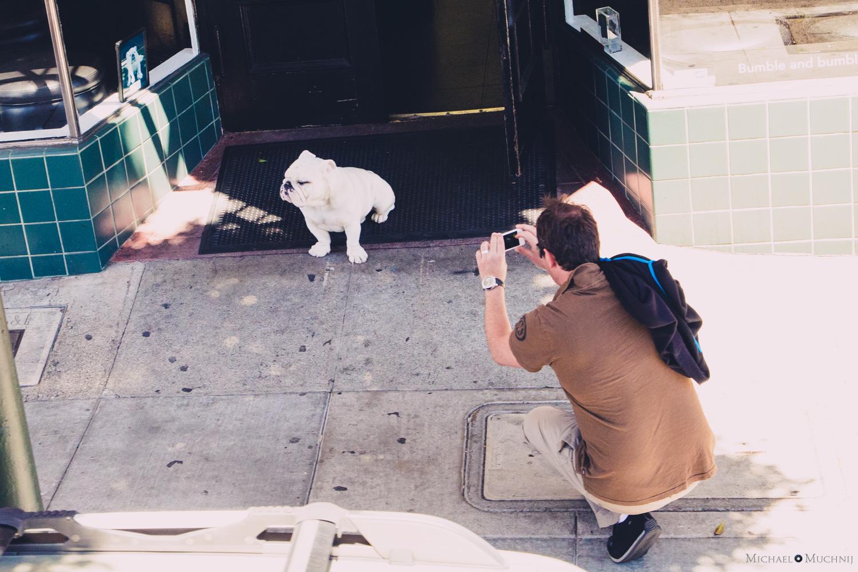 SF Bulldog.jpg