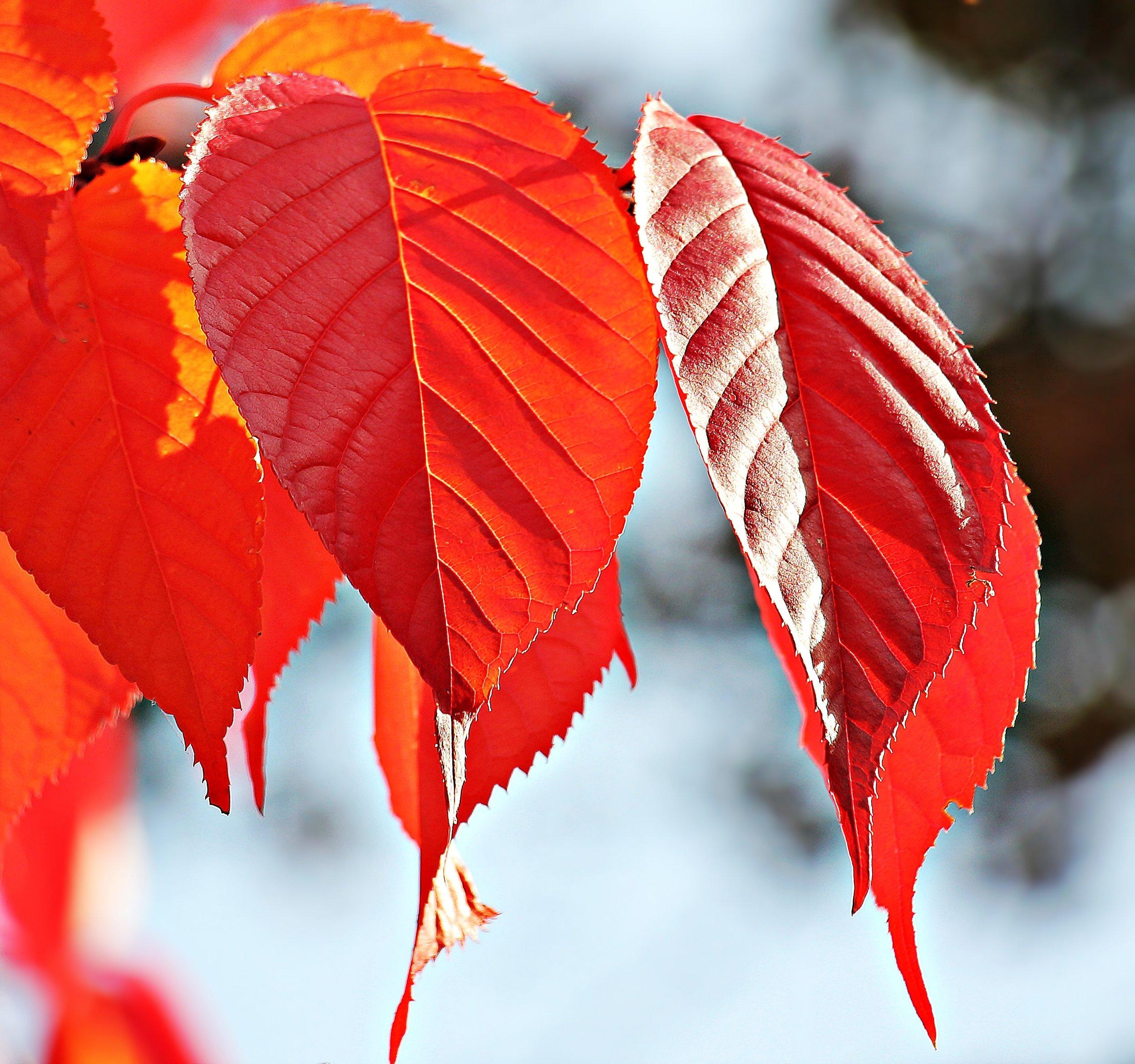 autumn-autumn-colours-autumn-leaves-219839.jpg