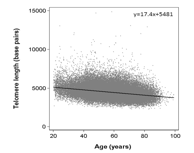We've found some correlation between telomere length and age, but it's extremely variable