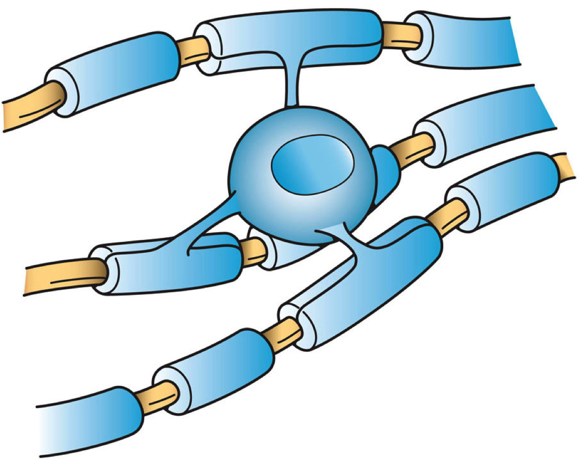 OLigodendrocytes (blue) myelinated axons to speed up electrical signals
