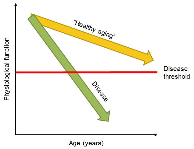 """People are described as """"healthy aging"""" or """"successful aging"""" or """"aging well"""" when their physiological functions decline but not to the extent that they cross the disease threshold. Image credit: Sven Bulterijs."""