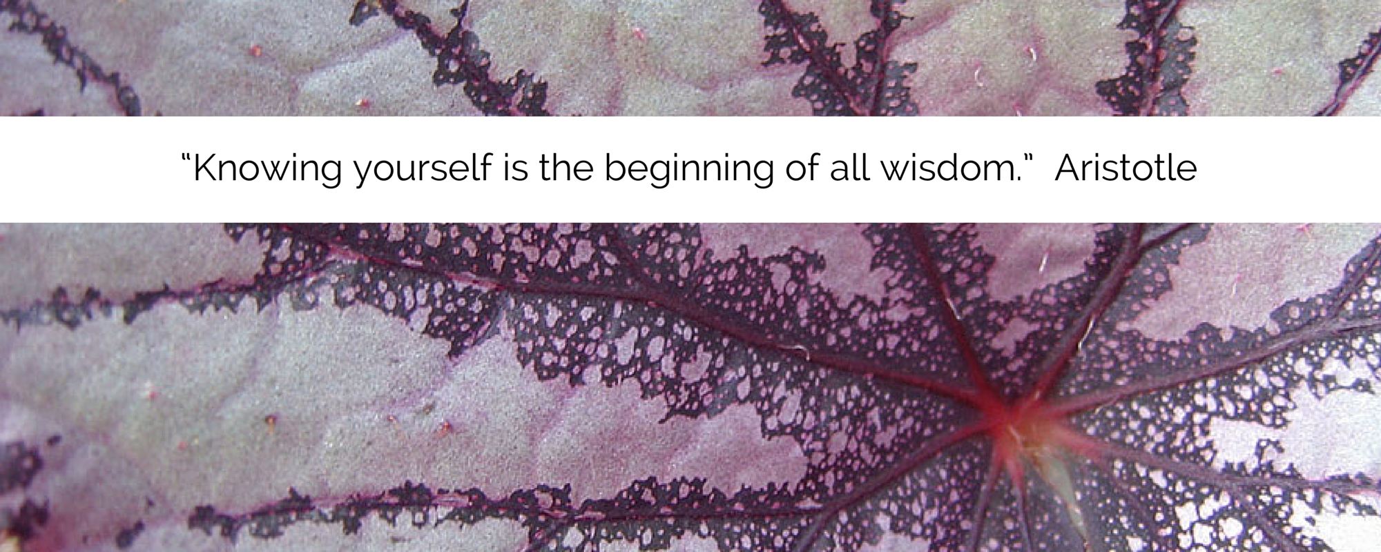 """Knowing yourself is the beginning of (1).png"