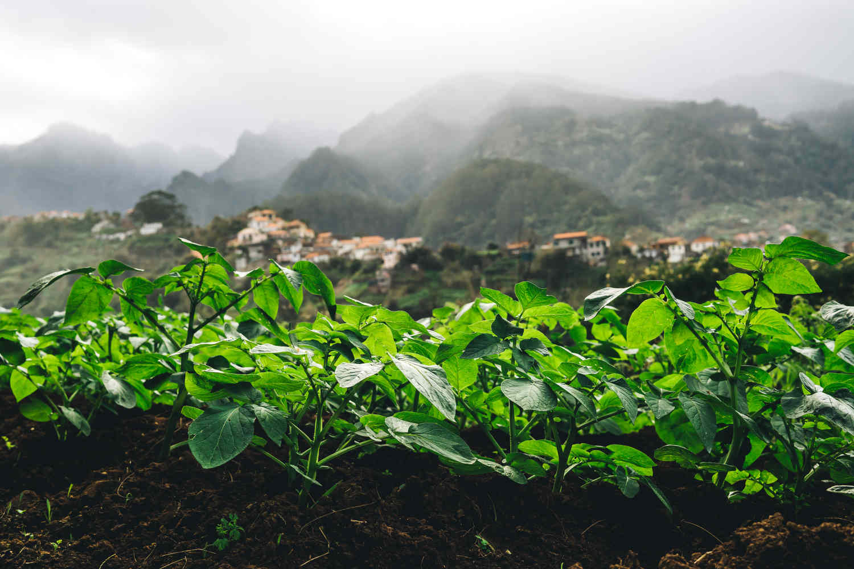 Madeira025.JPG