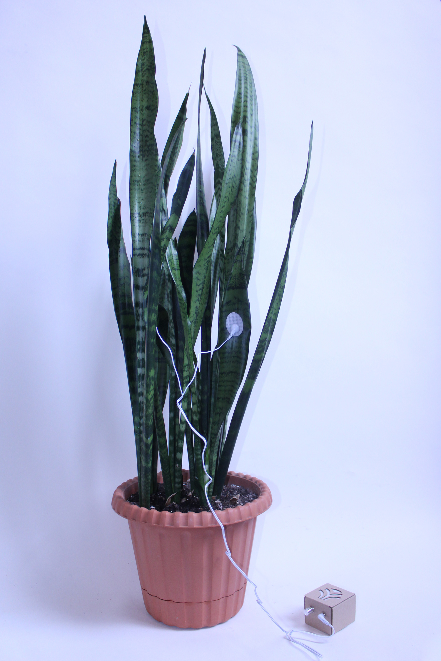 Plant+00.jpg