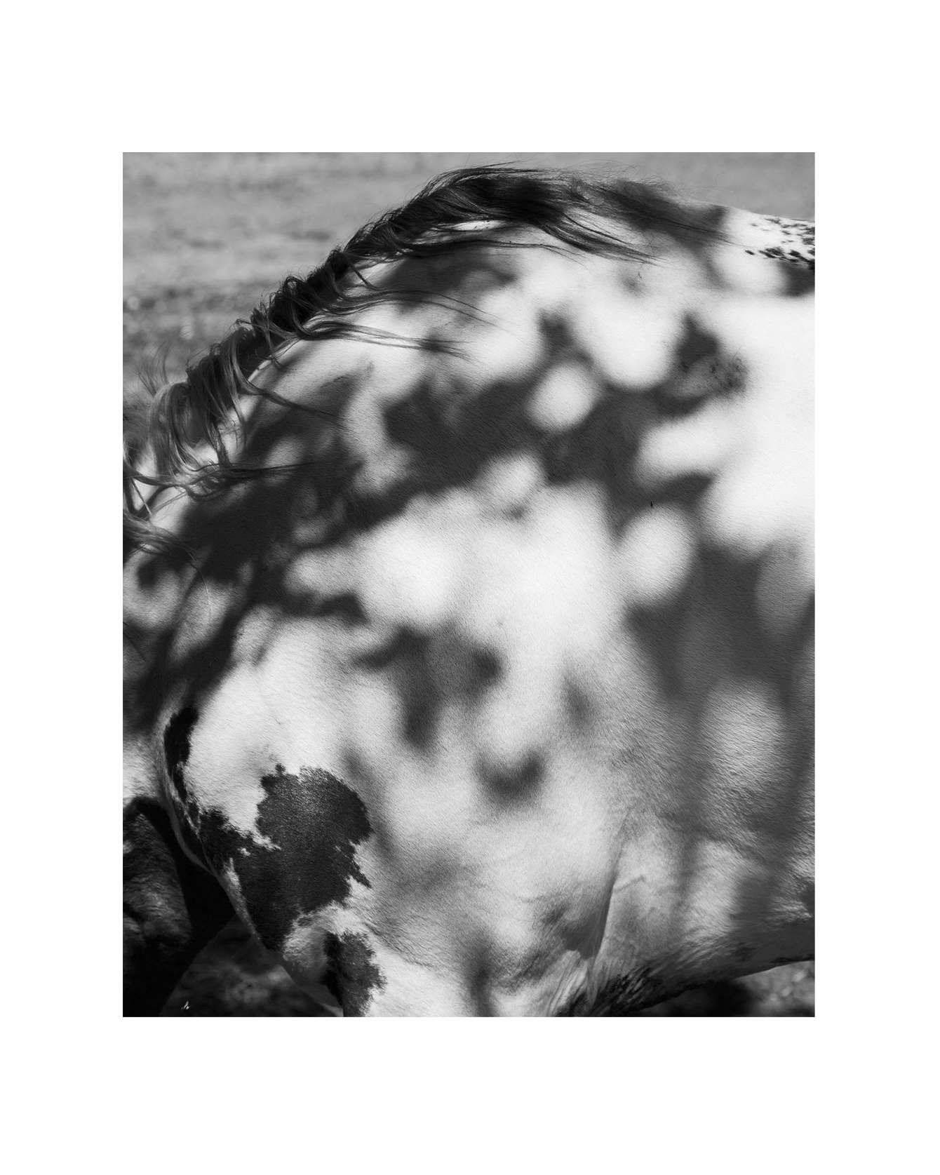 Horseback_1340_c.jpg