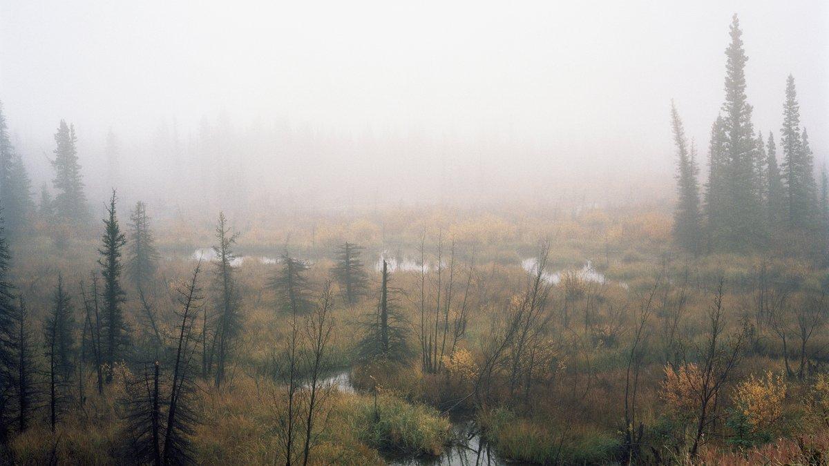 km-208-yukon-swamp_h.jpg