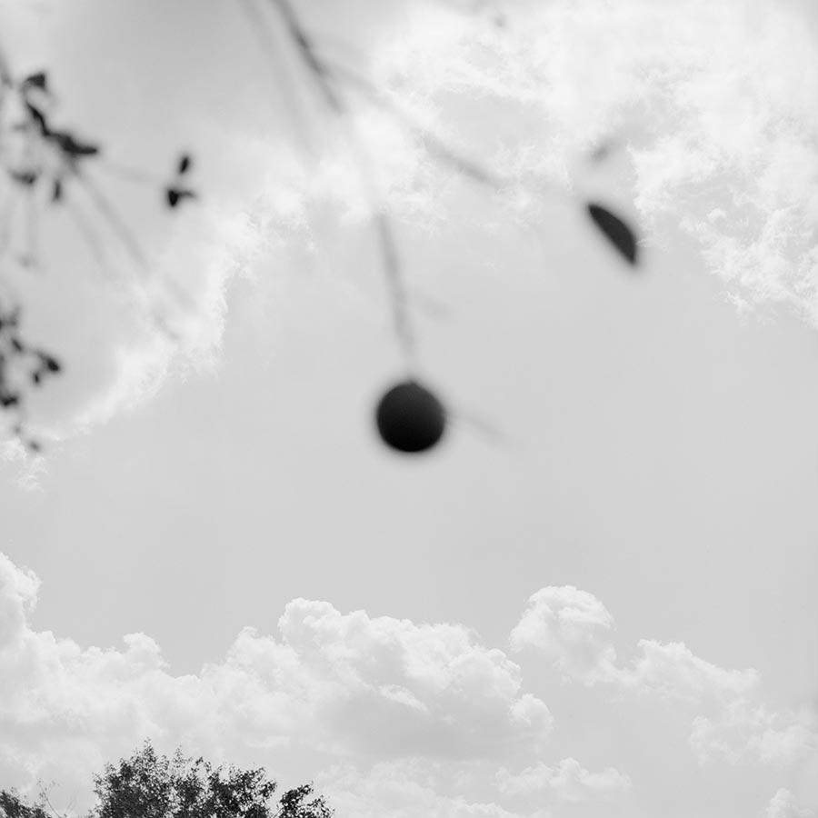 grove-5.jpg