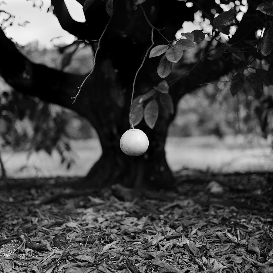 grove-8.jpg