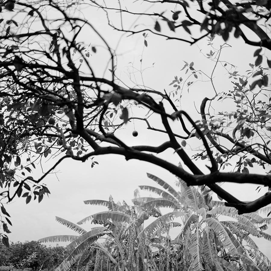 grove-9.jpg
