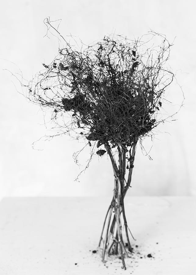 botanical-23.jpg
