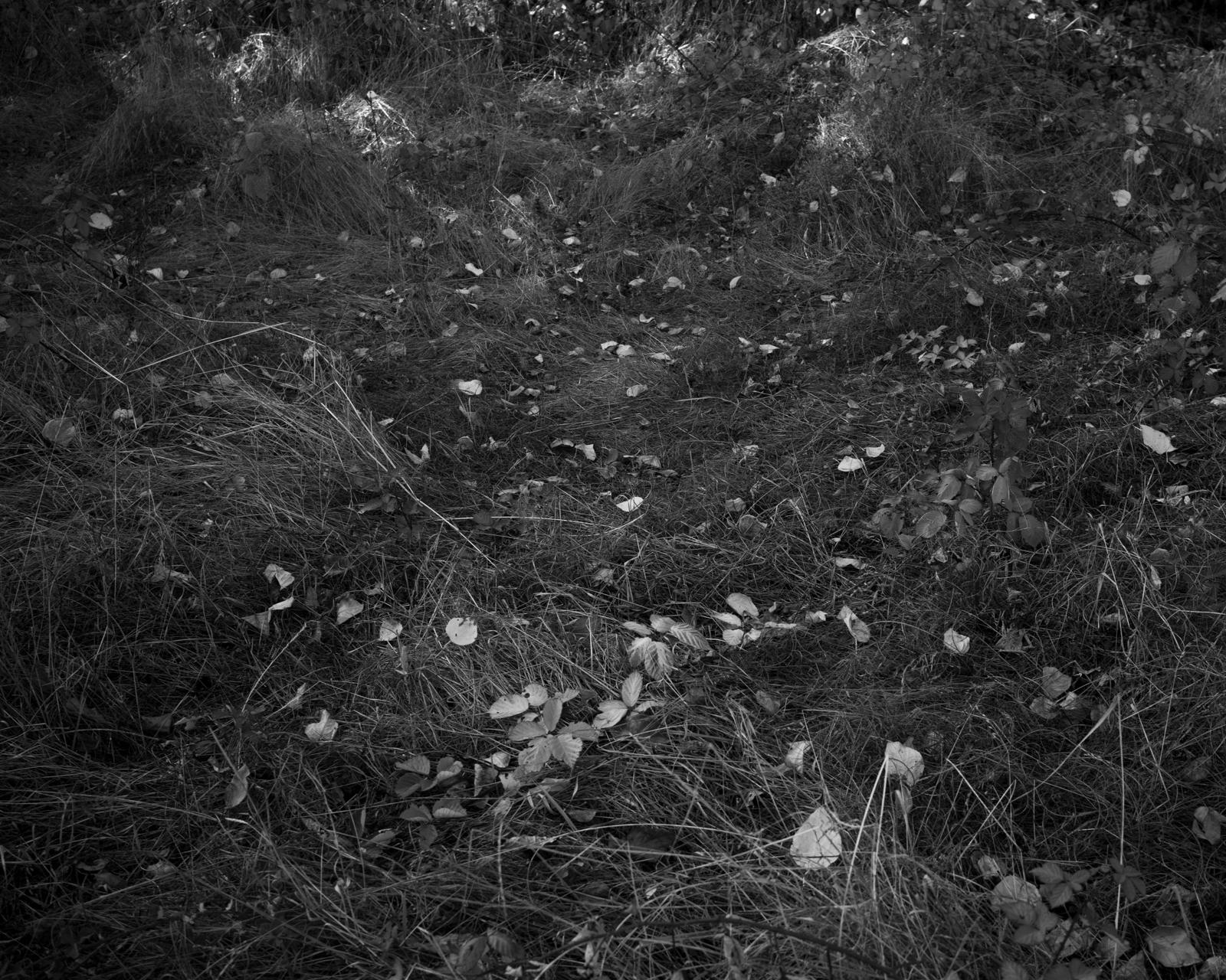 Perennial-3.jpg