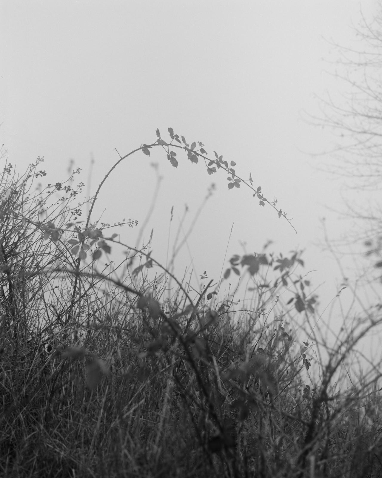 Perennial-10.jpg