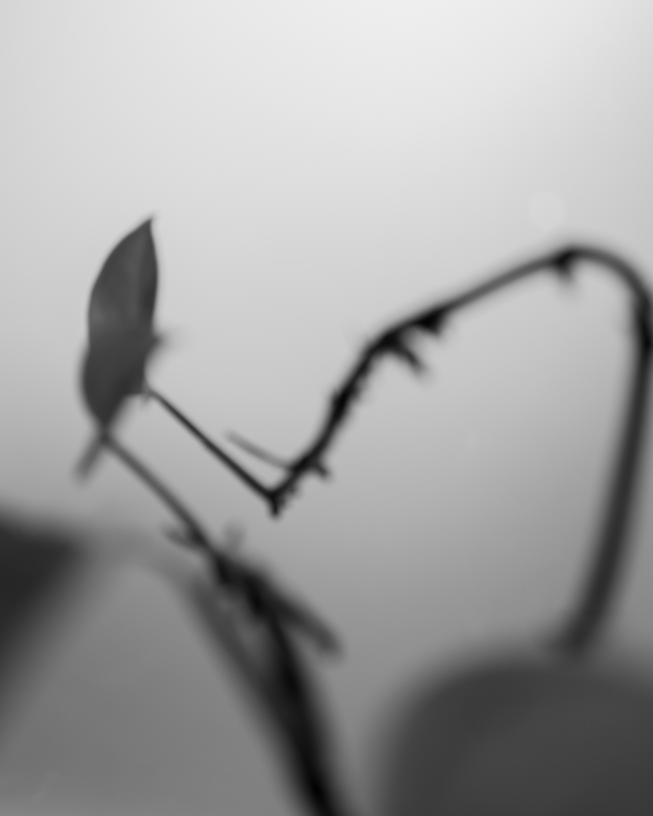 Perennial-12.jpg