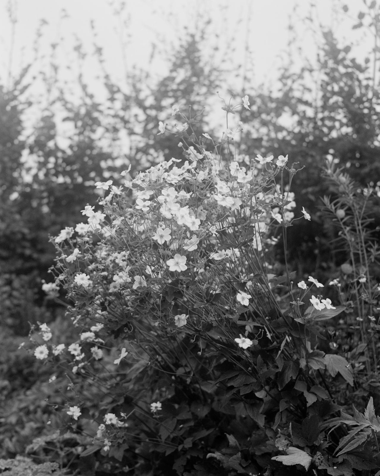 Perennial-11.jpg