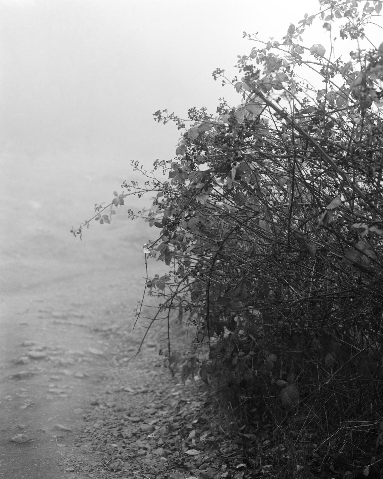 Perennial-14.jpg