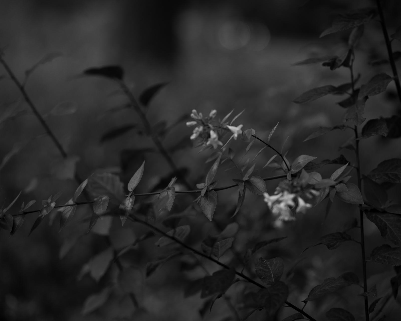 Perennial-17.jpg