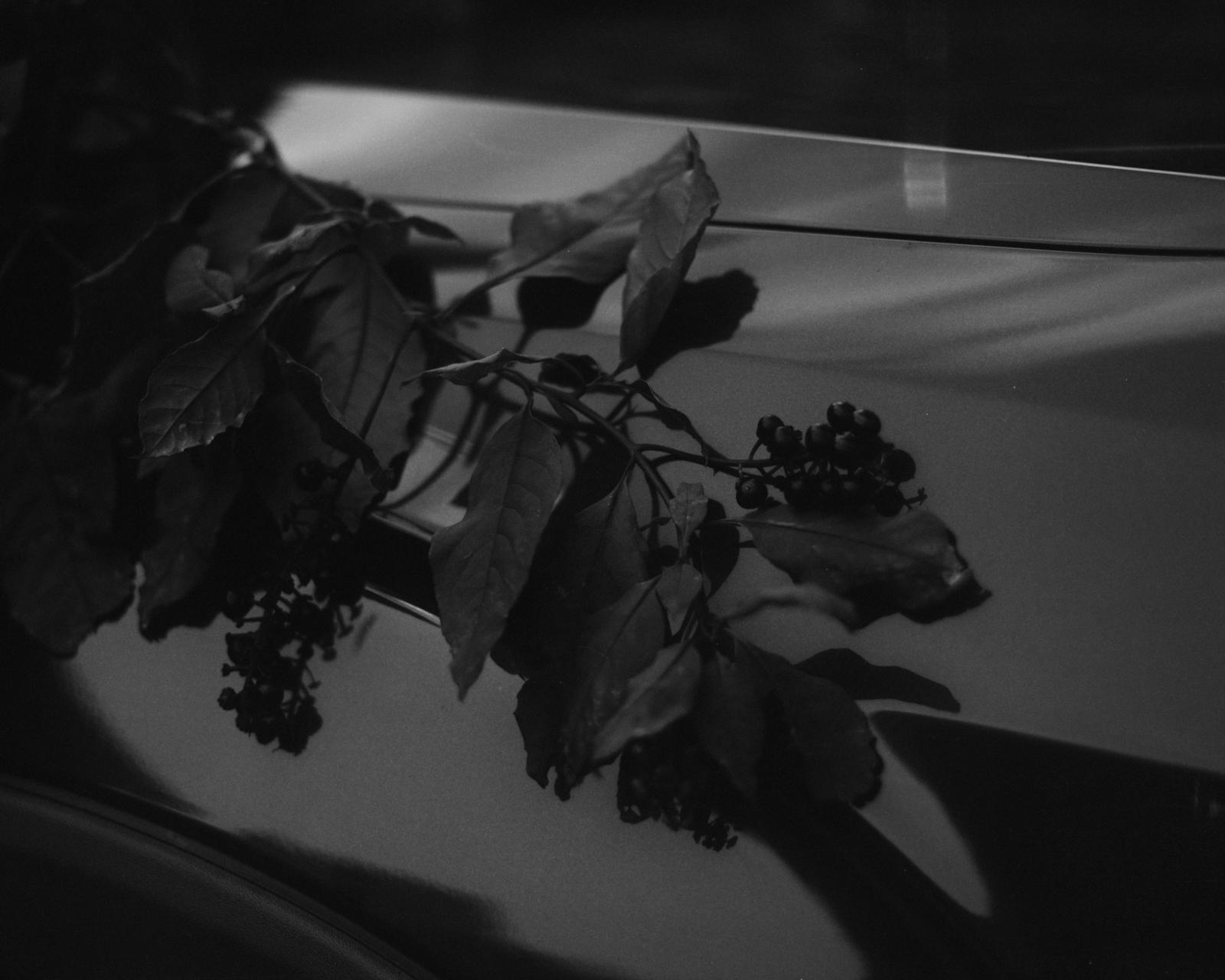 Perennial-20.jpg