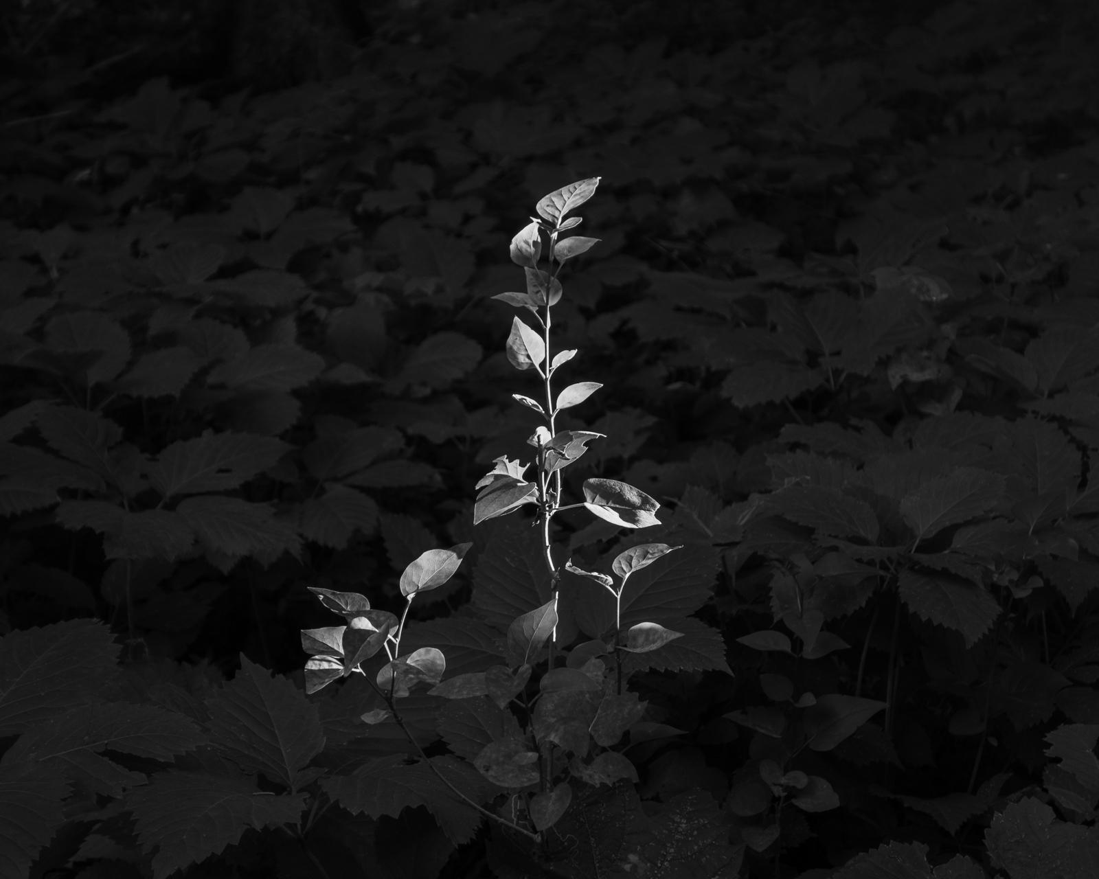 Perennial-21.jpg