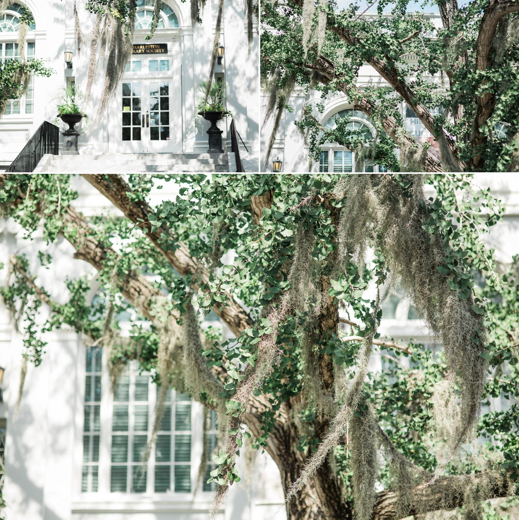 charleston-south carolina-wedding photographer-fort wayne-indiana-spanish moss
