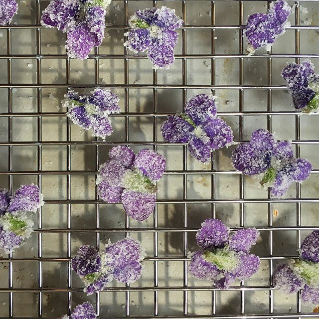 Just making some candied violets, as you do... #beauty #violets #pastry #spring #may