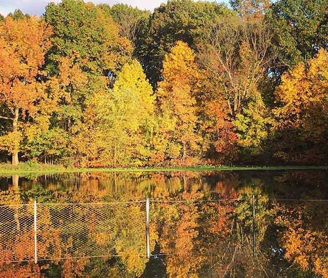Perfect reflection in #prospectpark. #autumninnewyork