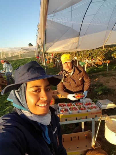 Two youth pose for a selfie while working on a strawberry farm overseas. Photo credits: M. Takai.