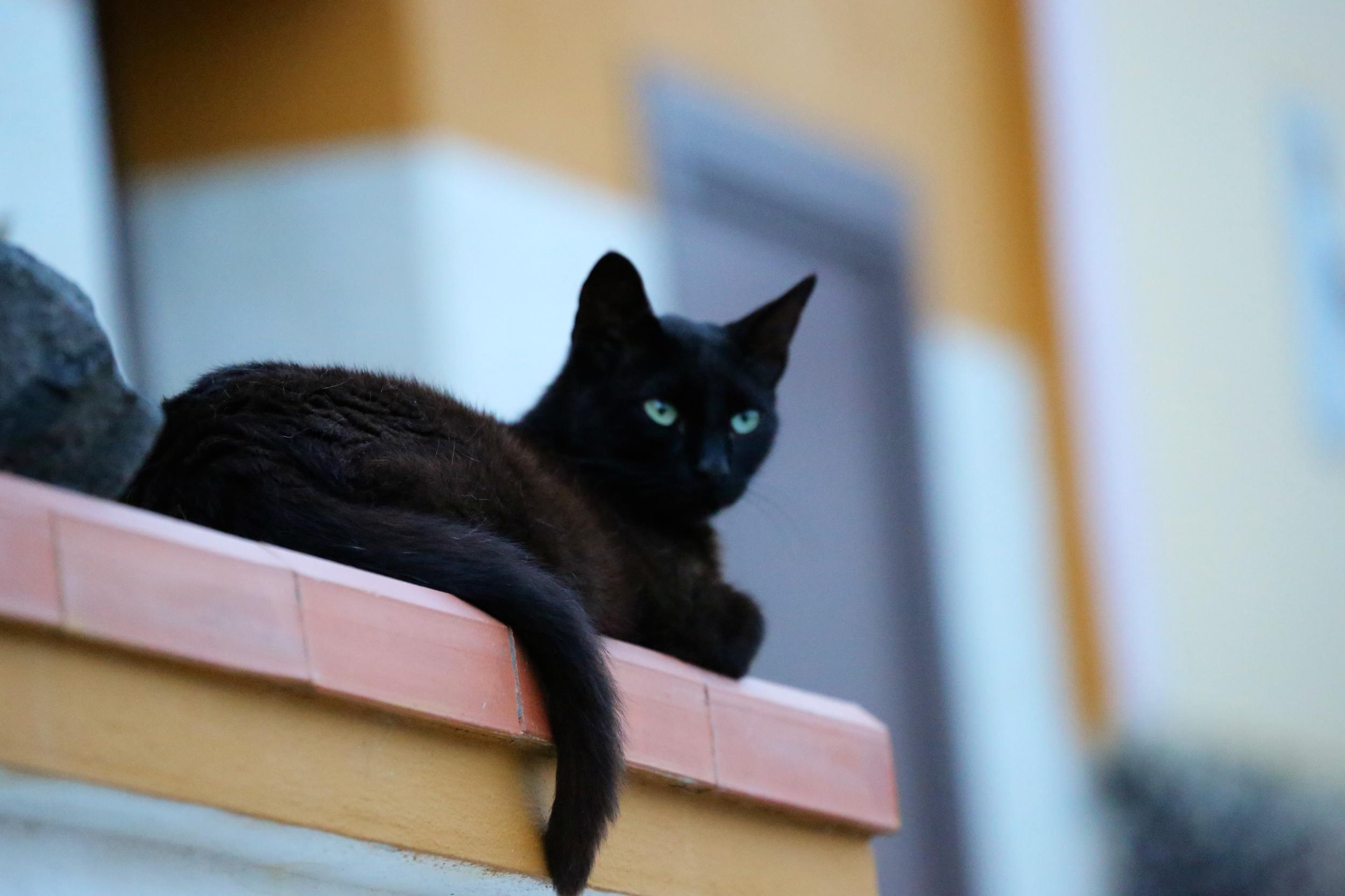 Cat in Linosa.jpg